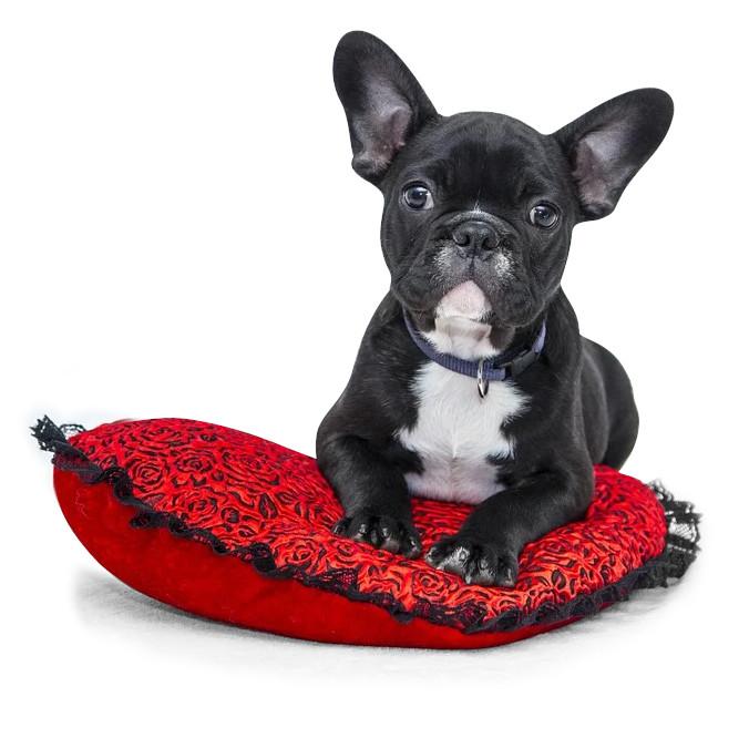 legowisko-dla-psa-poduszka